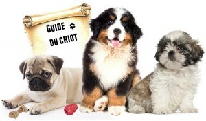 guide chiot